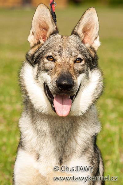 http://galerie.cswolfdog.cz/albums/userpics/10005/3~0.jpg