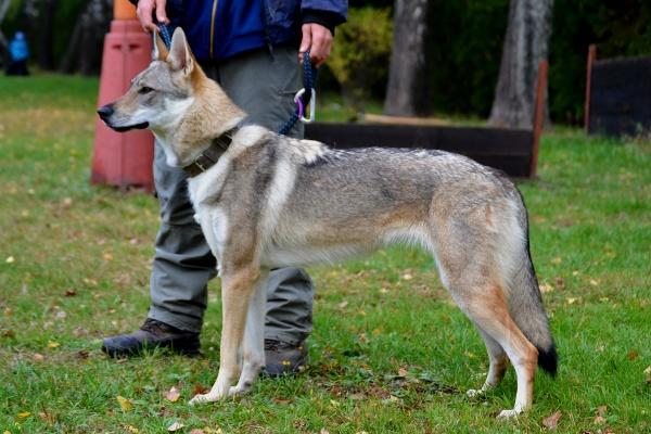 http://galerie.cswolfdog.cz/albums/userpics/10005/DSC_0081~0.jpg