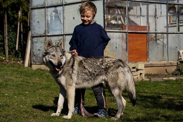 http://galerie.cswolfdog.cz/albums/userpics/10005/DSC_0367.jpg