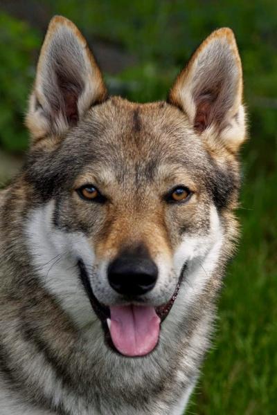 http://galerie.cswolfdog.cz/albums/userpics/10005/P5311855.jpg